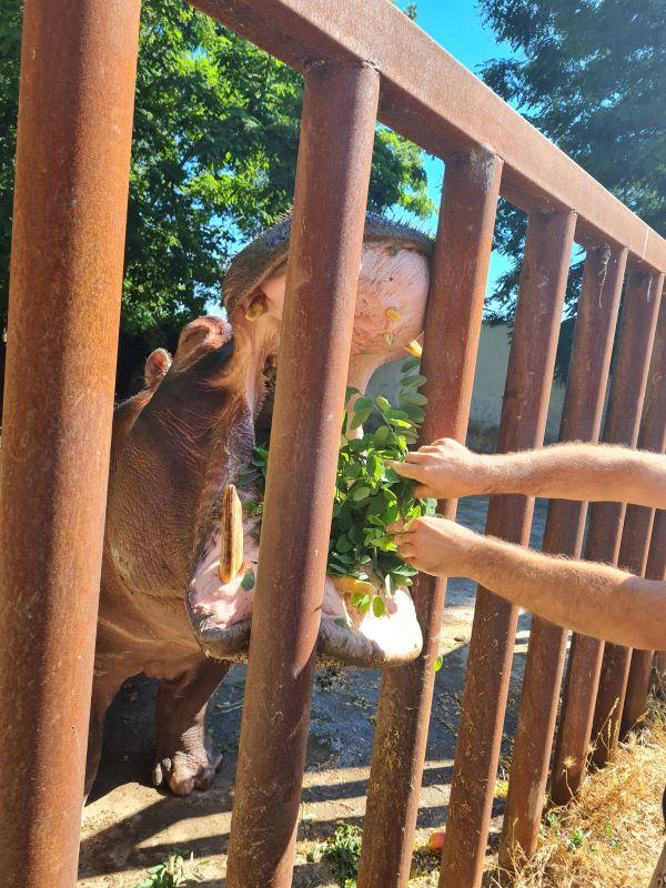 Ti porto fuori: tour virtuale allo Zoo di Napoli per i bambini del Santobono Pausilipon
